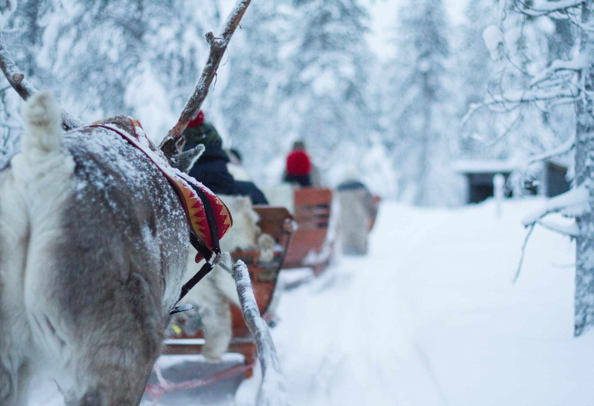 Testez le traîneau à chiens en Laponie finlandaise, une expérience inoubliable